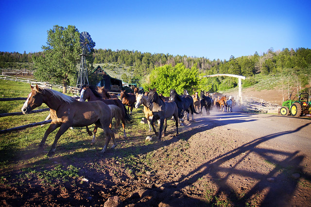 Black Mountain Colorado Dude Ranch horses running