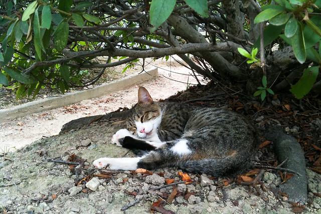 Today's Cat@2011-08-15