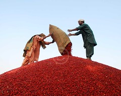 Red chilli market, Kunri, Sindh (Ameer Hamza) Tags: 2 people men pepper workers chili market herbs spice business spices trading worker spicy bazaar sack chilli piling herb chillies commodity reddish pilling headgear redchilli spiced spicetrade ple kunri ameerhamzaadhia