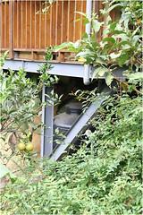 自然谷照片-簡易雨水回收