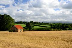 Red Barn Roof (jonshort58) Tags: uk roof red summer sky field barley sunshine clouds barn tin nikon view devon dartmoor d7000