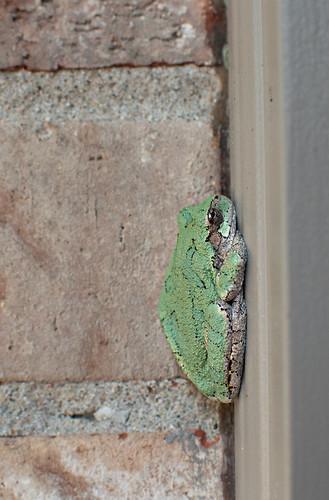 frog-side