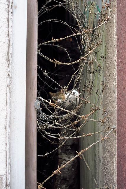 Today's Cat@2011-08-25