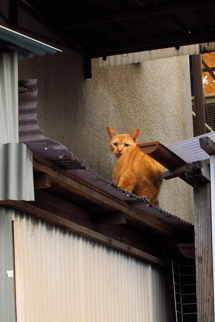 Today's Cat@2011-08-26