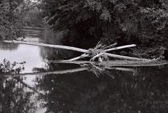 Au fil de l'eau... (jour de vent) Tags: eau 8 rivire nikonf100 arbres allier lasioule 24mmafd2