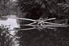 Au fil de l'eau... (jour de vent) Tags: eau 8 rivière nikonf100 arbres allier lasioule 24mmafd2