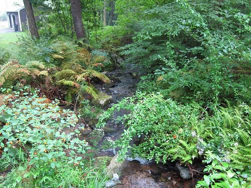 Our stream pre Irene