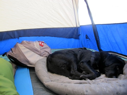 Happy sleeping in the tent