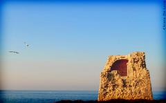 Torre di Roca (Chiara Riccia) Tags: italy parco italia mare torre poesia chiara salento puglia roca lecce grotta foca archeologico riccia dellorso messapi posia melendugno chiararezza taotor storiasan