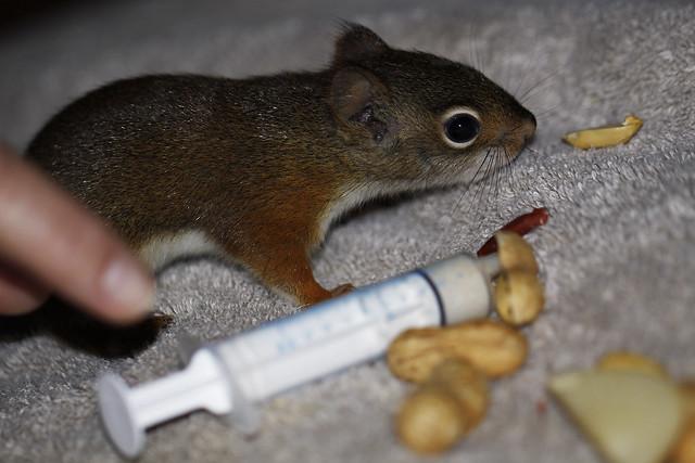 roxy peanut