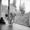 At Peace (DowntownRickyBrown) Tags: flowers blackandwhite 120 mediumformat bokeh hasselblad windowlight fujineopanacros selfdevelop rolleiflex28d ilfosol3 thevampirelair