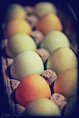 Organic, cage free, locally grown eggs (msbellee) Tags: blue food brown green nc colorful eggs local organic freerange ashecounty westjefferson chickeneggs cagefree nongmo sansgmo gmofreeworld