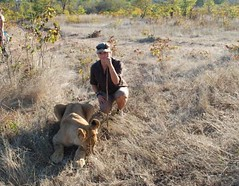 FC Blog Sam Towne Walking with Lion 1