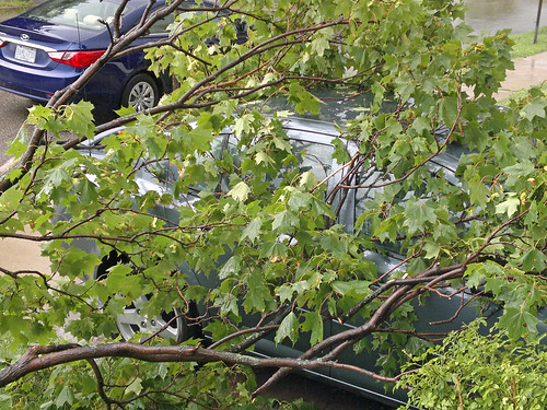 tree branches cover yard and car 6