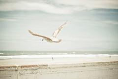 Sea Of Blue (JoyHey) Tags: art beach coast soft pastel fineart photograph shore dreamy allrightsreserved joyhey wwwjoyheycom