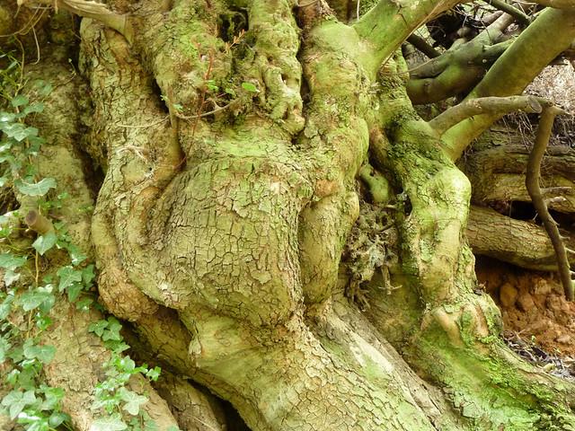 17 la fuerza del tronco