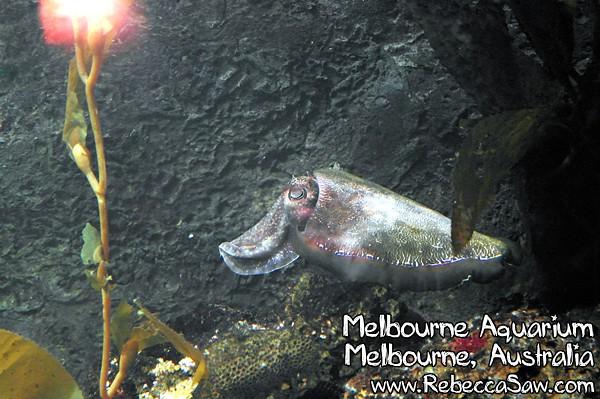 MELBOURNE AQUARIUM-25