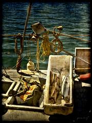 RETOUR-DE-PECHE (Pierre D. Photographiste) Tags: france pentax poisson var toulon k7 2011 pierrediez