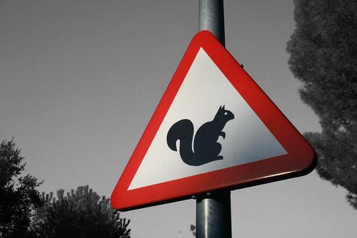 Warning! Dangerous....errrr.. Squirrels!?