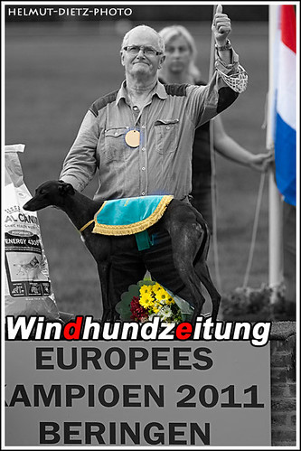 Whippet European Champion 2011 Bitches: Bindi (Wim v.d. Broek, NL)