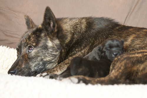 Kumi's first litter!