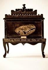 Wunderkammer Cabinet 1