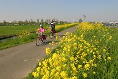 flowers along the way (WWW.CYCLETOURS.COM) Tags: flowers cycling tulips denhaag barge keukenhof readyforspring visitholland historicalholland