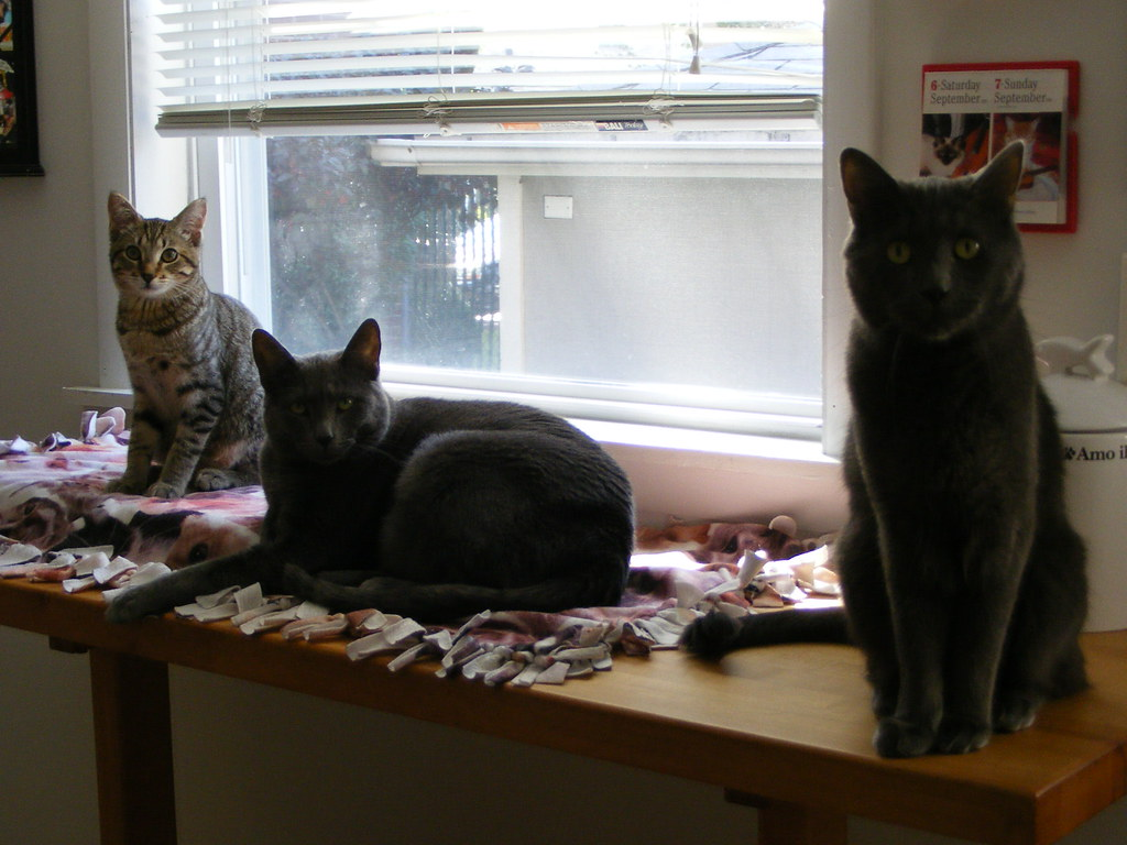 Baby Girl Emma (left), R2 (center), Smokey (right)