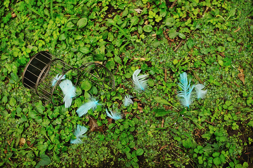 L'Oiseau bleu Forest_06 by ajari