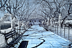 Lover's Lane (rtanphoto) Tags: nyc newyorkcity blue white leaves centralpark surreal infrared empirestate bigapple cs4 niksoftware conservbatory rommeltan rtanphoto