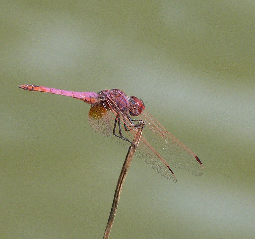 17-09-2011-dragonfly