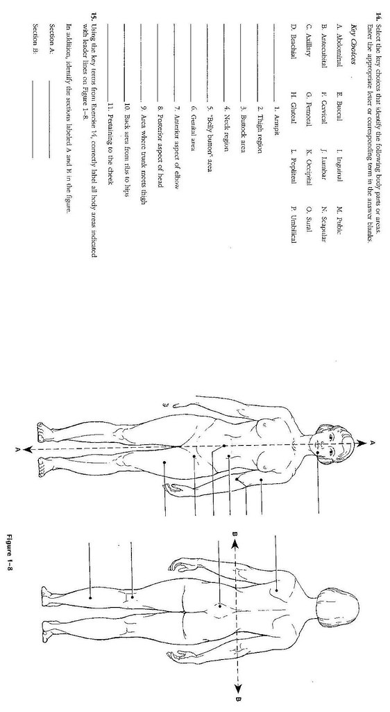 Anatomical Position 1