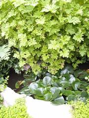利用不同的植物,層層淨化污水
