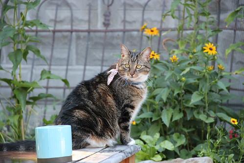 the kitty girl