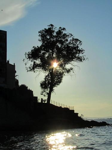 El sol en el �rbol by JoseAngelGarciaLanda