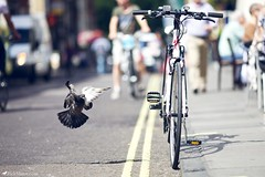 Bird & Bike (Rick Nunn) Tags: road street bird london lines bike dof soho flight rick nunn tyre canonef135mmf2l