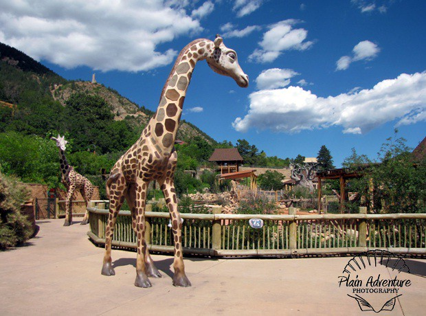Cheyenne Mountain Zoo: Colorado Springs