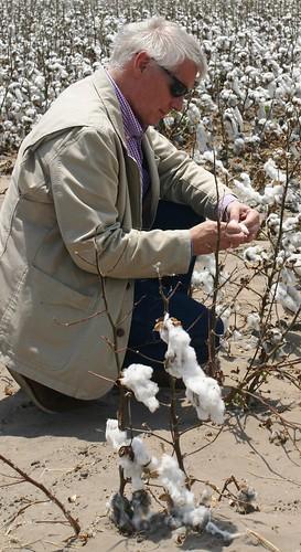 FSA Administrator Brice Nelson surveys cotton fields in drought-stricken Texas.