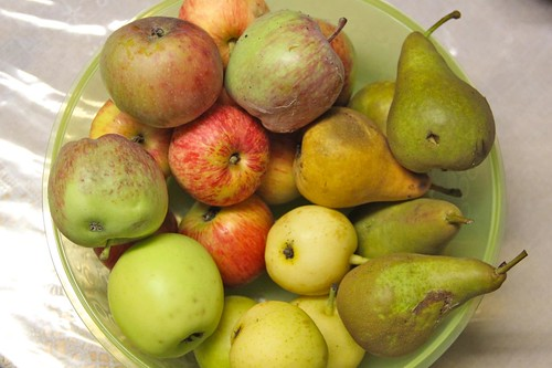 Harvested Apples, Pears and Asian Pears