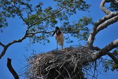 Pantanal - Porto Cercado