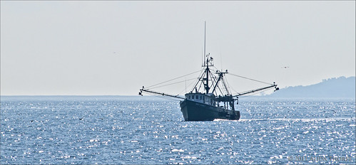fishing offshore by Alida's Photos