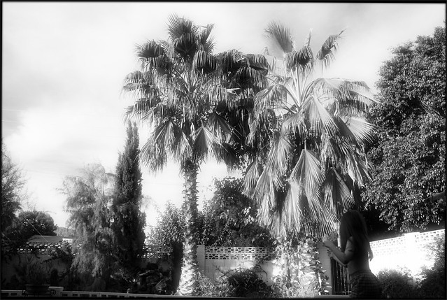 Scottsdale Backyard with Palms