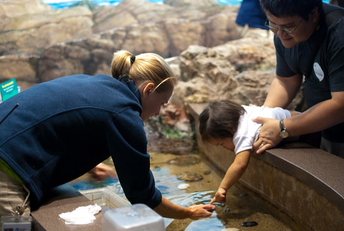 Touching sea creatures