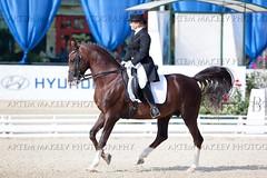 IMG_7820 (White Bear) Tags: horses horse artem    makeev