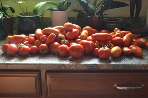 Tomatoes, round 2