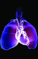 medrf_20704 (newarkbeth) Tags: blackbackground illustration glow heart human anatomy lungs aorta frontview trachea lung windpipe stylised venacava respiratorysystem superiorvenacava ascendingaorta 24570147