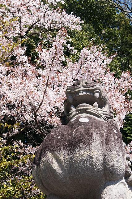 110413_132737_甲府市_武田神社