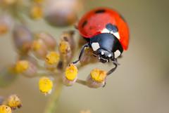 Ladybug (Treedo) Tags: mygearandme mygearandmepremium mygearandmebronze mygearandmesilver mygearandmegold mygearandmeplatinum mygearandmediamond gearandmebronze