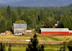 Our Ranch Tilt-Shift Version (Get Pushed Round 7) (misst.shs) Tags: barn nikon sunday challenge sliders tiltshift hss northidaho slidersunday getpushed