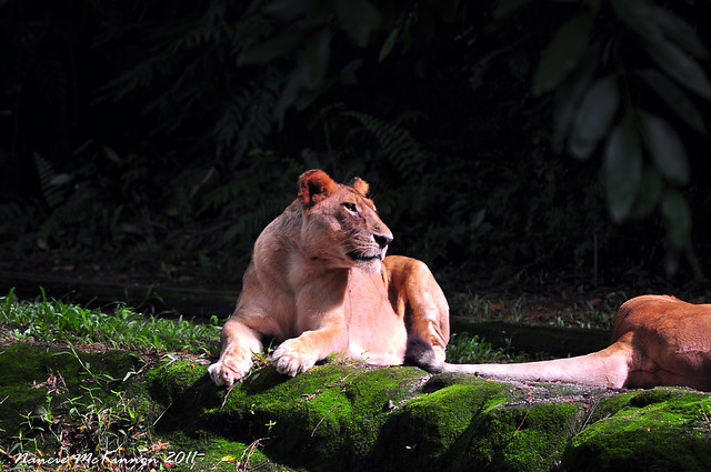 Basking in the Sun at the Singapore Zoo